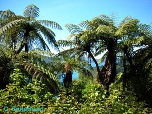 Palmen in den Marlborough Sounds