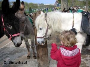 Ponystreicheln im Reiseprogramm