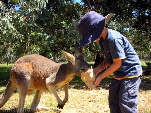 Känguru-Naschtüte