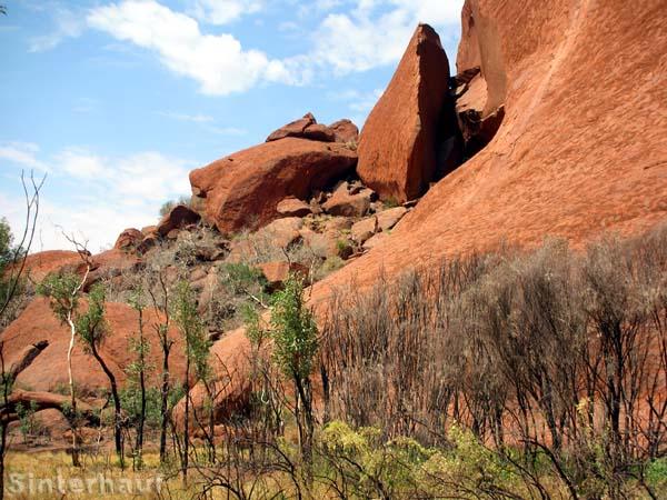 Ein winziger Teil des riesigen Uluru.