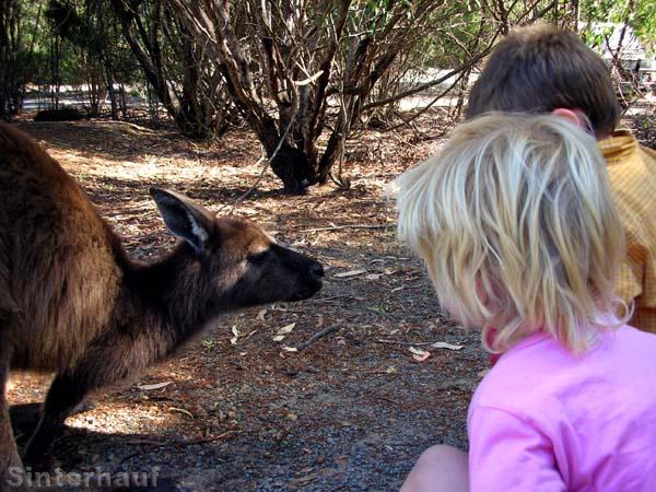Auf du und du mit dem Känguru