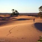 Wüste von New South Wales und South Australia