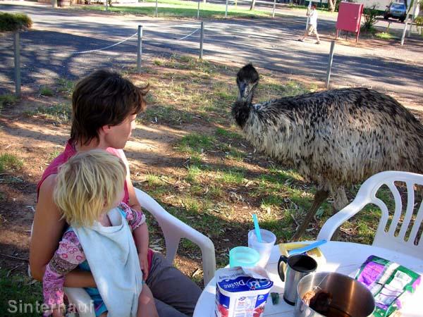 Begegnung mit einem zahmen Emu.