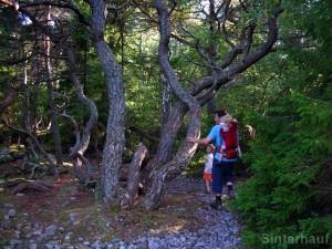 Im Zauberwald Trollskogen