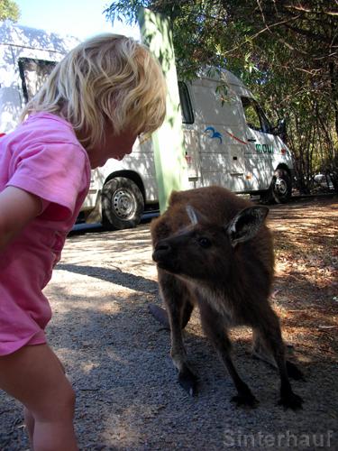 Auf du und du mit dem Känguru!
