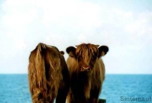 Tierische Ansichten auf Öland