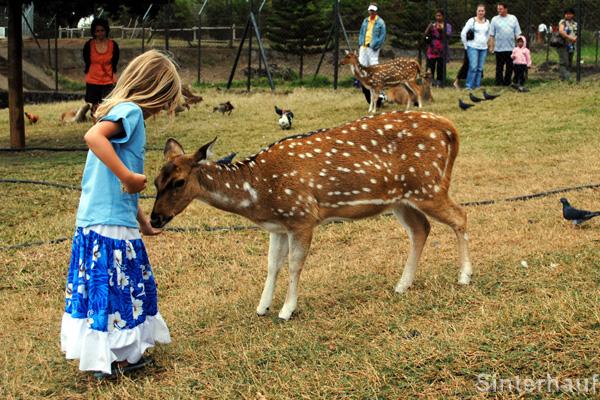Aufregende Tierwelt für kleine Besucher im Casela Birdpark