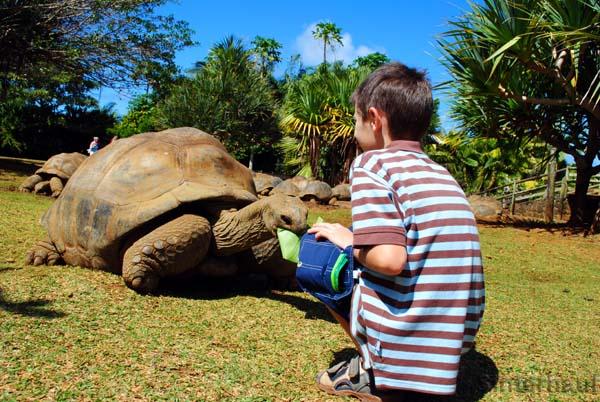 Einmalige Begegnung mit Riesenlandschildkröten