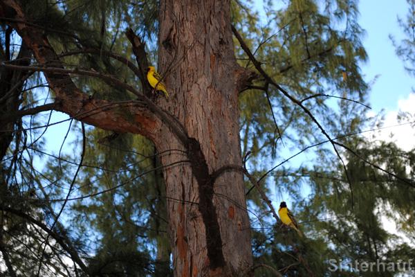 Freilebende exotische Vögel im Casela Birdpark