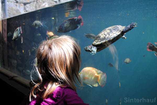 Zum Bewundern schön - Meeresschildkröten