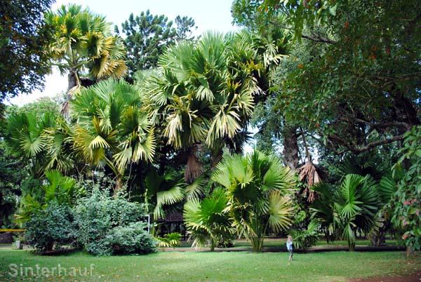 Die Kinder sind bei diesen gigantischen Palmen kaum noch zu sehen