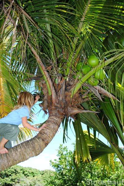 Klettern auf Palmen ist cool