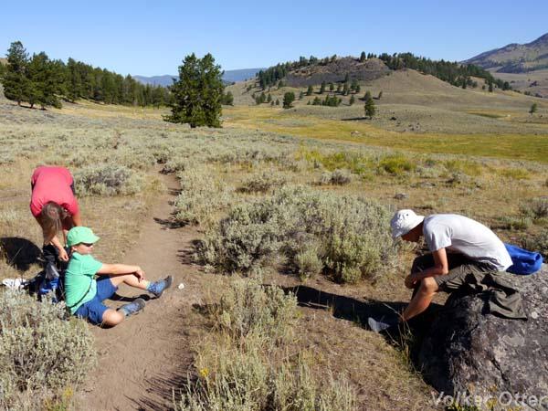 Wanderung Specimen Ridge Trail