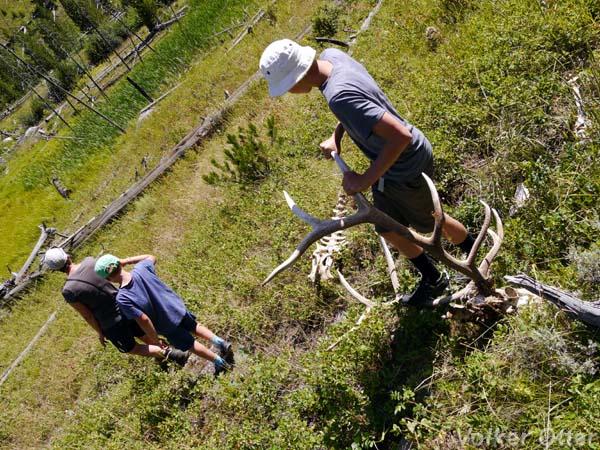 Wildniswanderung Tower Creek Trail