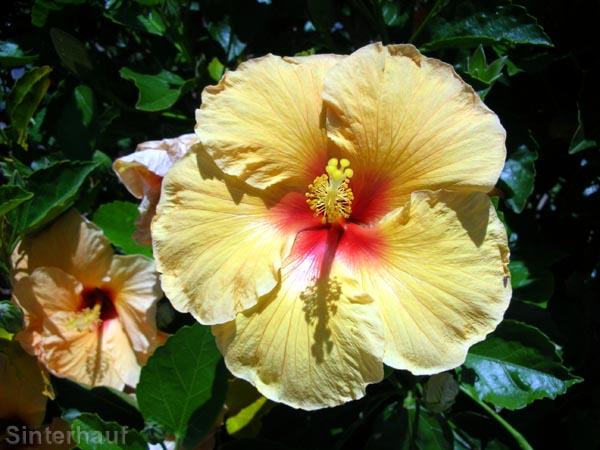 Tropische Blütenpracht im Nordland