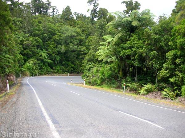 Urwald am Rande der Straße