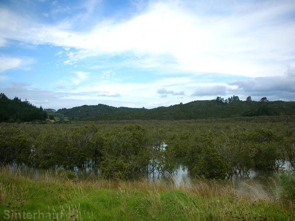 Mangroven in der subtropischen Zone des Nordlandes