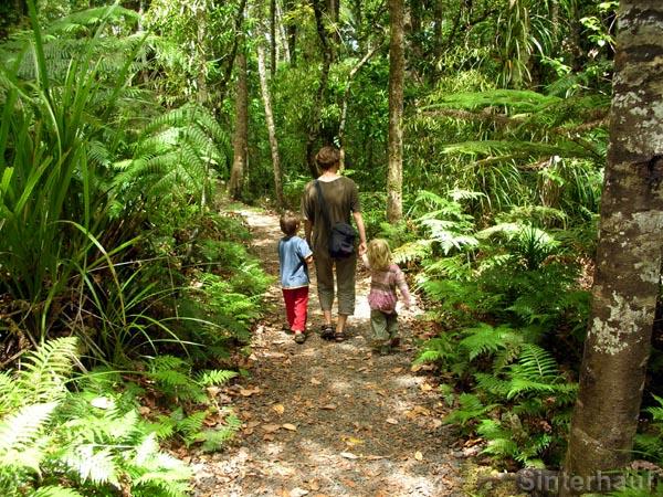 Wanderung im Waipoua Forest