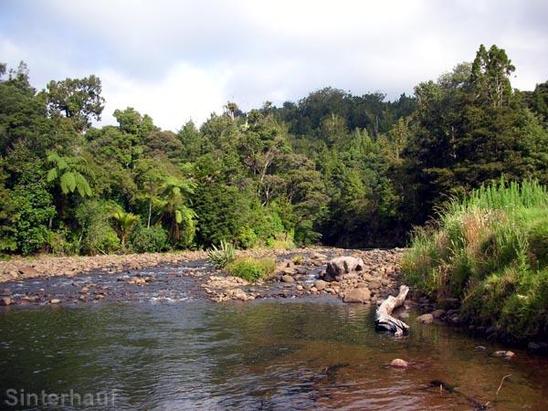 Fluss im Waipoua Forest