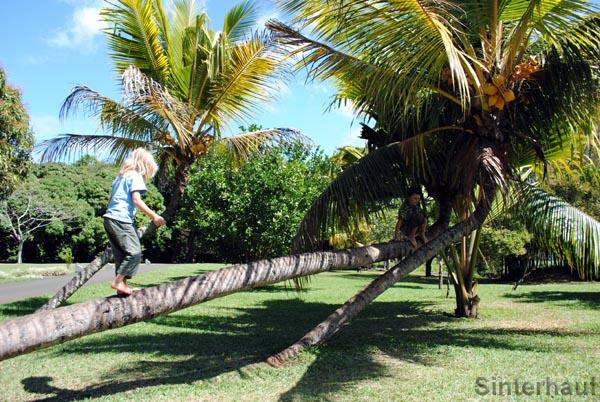 Natürlich verbogene Palmen