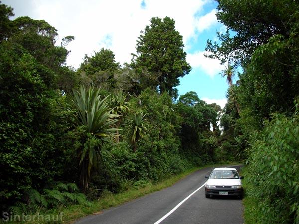 Regenwald im Mt. Taranaki Nationalpark