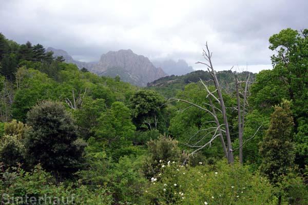 Blick in die Landschaft bei Evisa