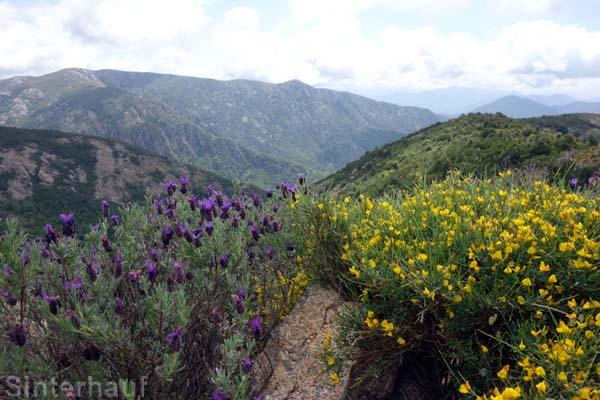 Blumen und Berge im Wechselspiel