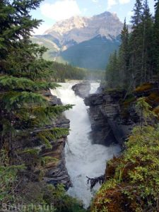 Die Athabasca Falls