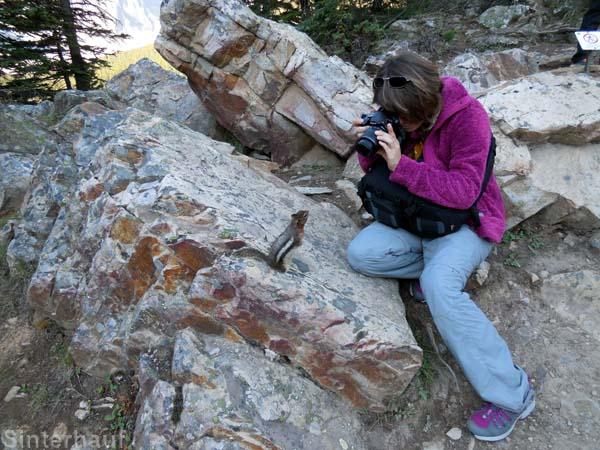 Neugierige Streifenhörnchen lassen sich wunderbar fotografieren