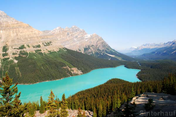 Der Lake Peyto am Icefields Parkway