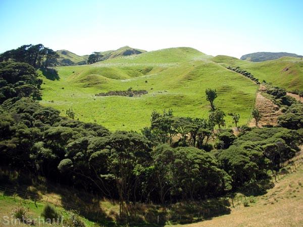 Hügelige Schafweiden bei Farewell Spit