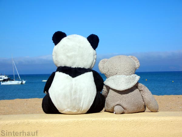 Unsere beiden kuscheligen Reisebegleiter