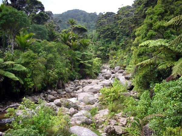 Urwälder am Heaphy Track