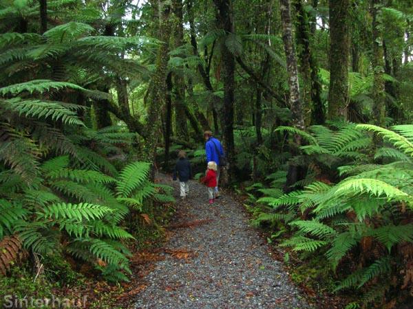Kurze Wanderung durch einen Regenwald an der Westküste
