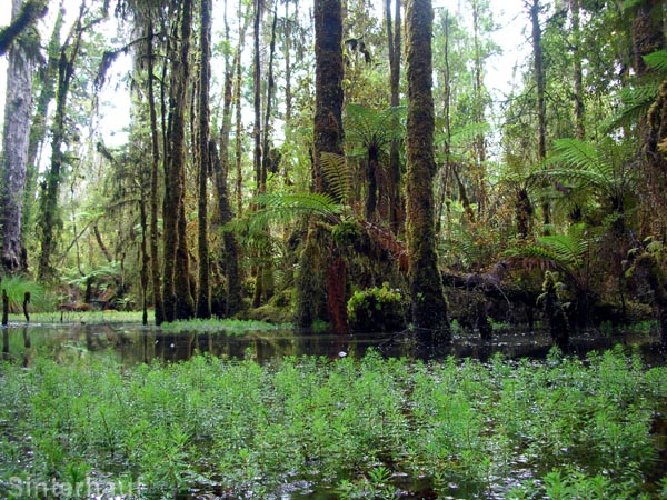 Mehr Wasser als Wald
