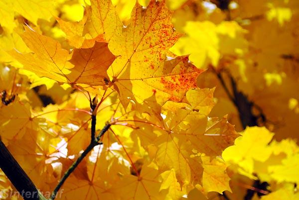 Herbstlaubfarben im Spessart