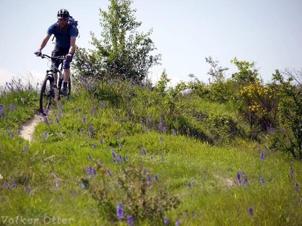Thekenberge-schmale Trails