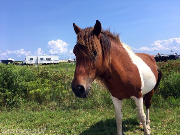 Ein wildes Pony sagt, Hallo