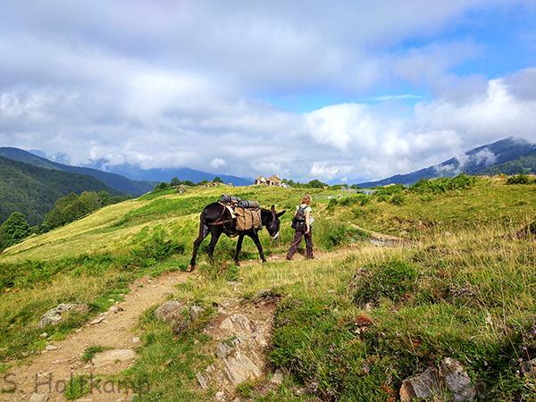 Eselwanderung in den Pyrenäen