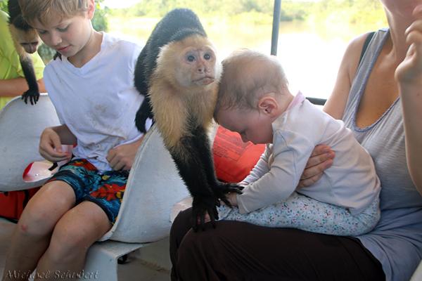 Auf Tuchfühlung mit Affen