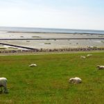 Nordsee ist Schafsland - määähh!