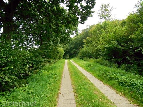 Der Wikinger-Friesen-Weg
