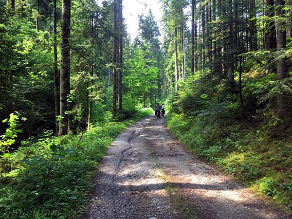 Waldstrecken auf dem Drei-Täler-Radweg