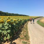Der Mainwanderweg bei Kitzingen