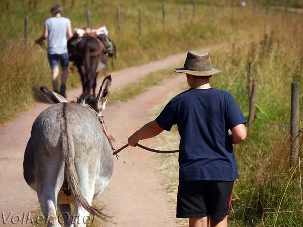 Ein tierisches Vergnügen - Wandern mit Eseln