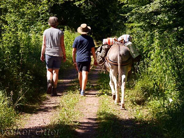 Wandern mit Eseln bedeutet Gelassenheit