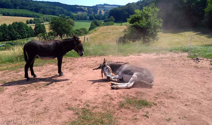 Zwei Esel im Glück