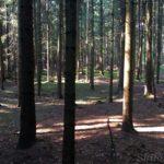 Diese Etappe führt durch zahreiche Wälder
