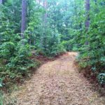 Kurze Abschnitte führen durch den Wald