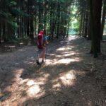 Seltene Waldwege auf dem Mainwanderweg